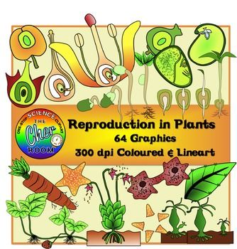 asexual reproduction in animals pdf