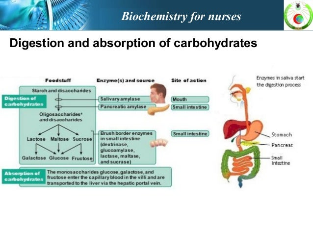 digestion and absorption of carbohydrates biochemistry pdf